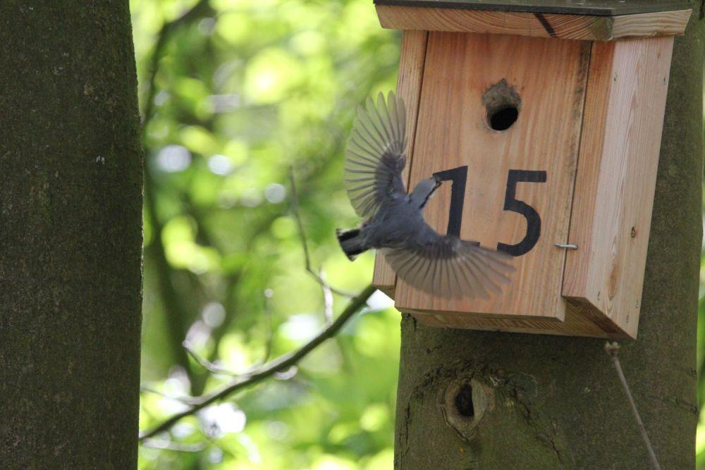 Vogelschutz-Projekt